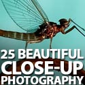 Post Thumbnail of 25 Beautiful Close-up Photography
