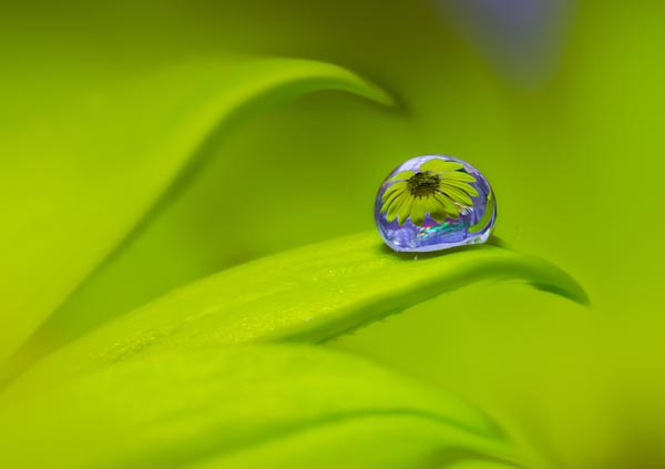 Beautiful Water Drop Photography 1