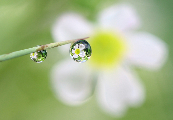 Beautiful Water Drop Photography 18