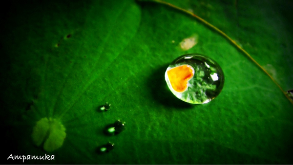Beautiful Water Drop Photography 26