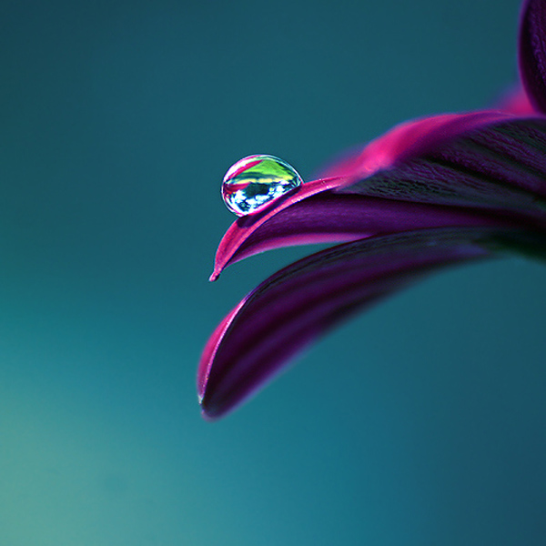 Beautiful Water Drop Photography 27