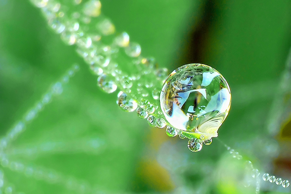 water droplet photography reflected - photo #20