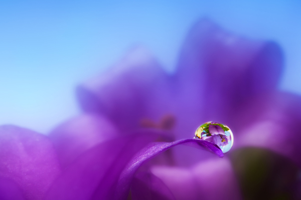 Beautiful Water Drop Photography 6