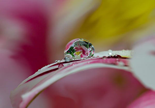 Beautiful Water Drop Photography 7