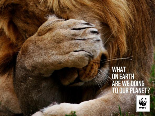 WWF: Lion Advertising Poster-36