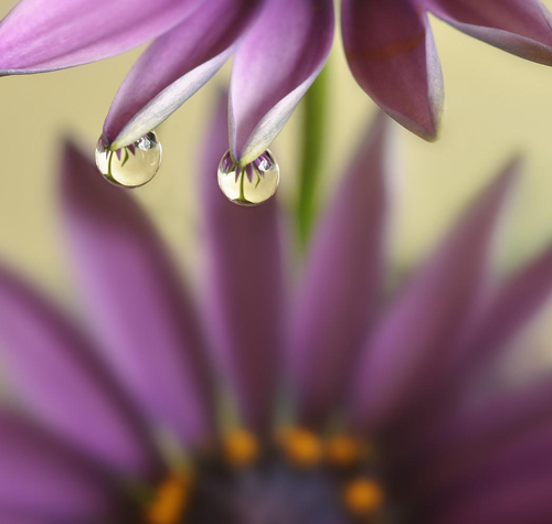Water Drop Photography - 2