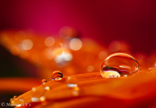 Water Drop Photography - 25