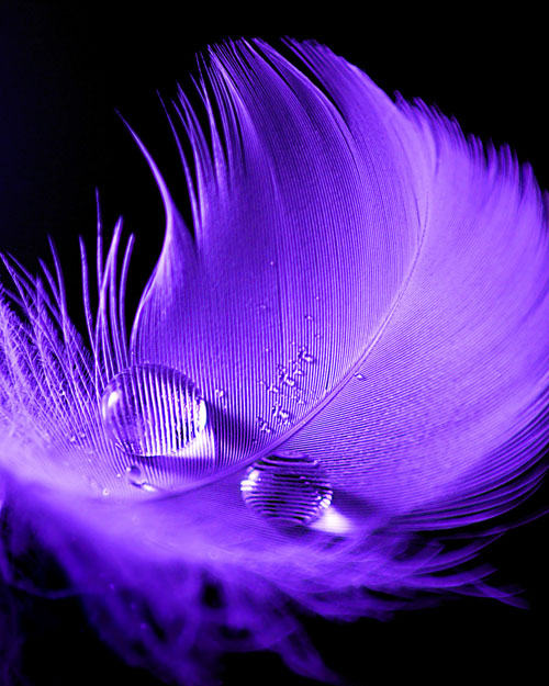 Water Drop Photography - 31