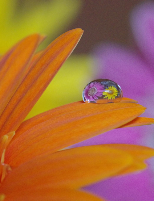 Water Drop Photography - 38