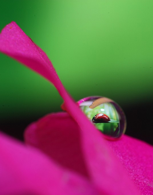 Water Drop Photography - 41