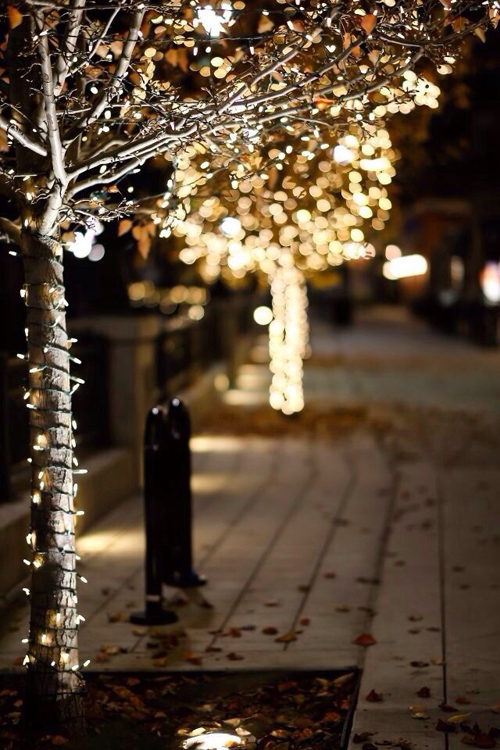 Twinkle Lights Photography-1