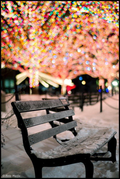 Twinkle Lights Photography-16