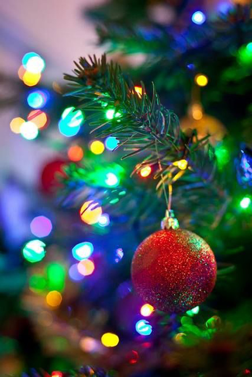 Twinkle Lights Photography-3