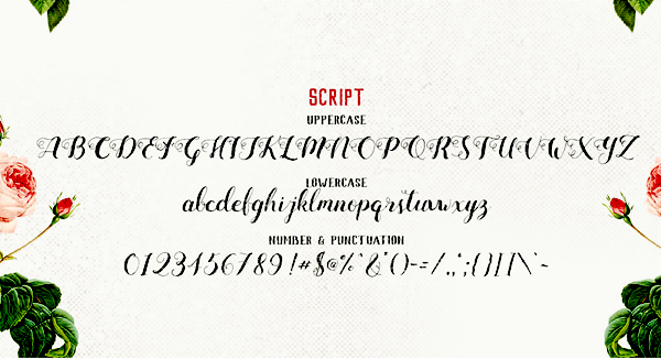 Mightype Script Font Letters and Numbers