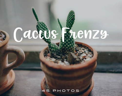 45 Free Pics of Cactuses