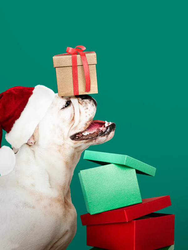 Free Best Christmas Celebration Photos and Cards - 27