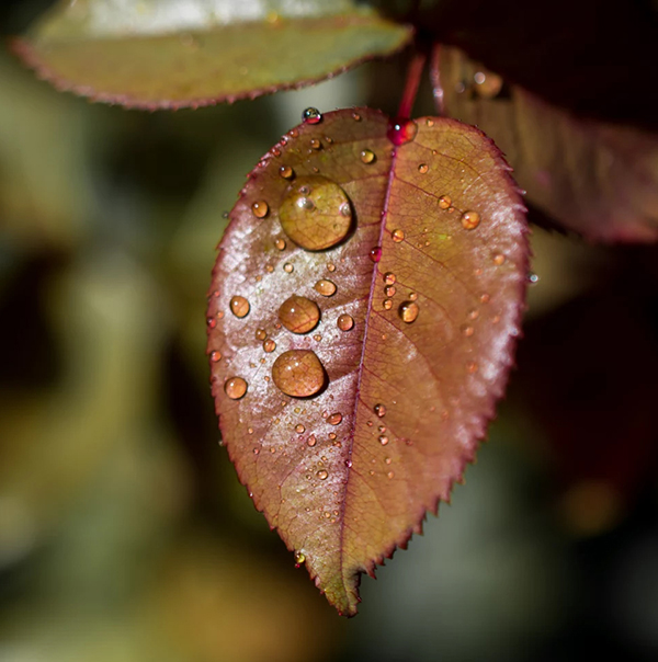 Beautiful Examples Of Water Drop Photography - 16