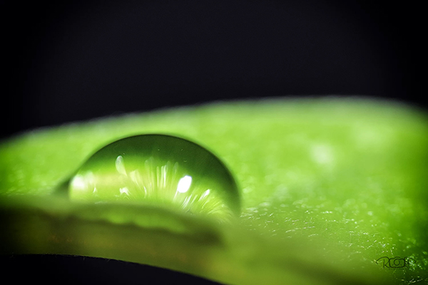 Beautiful Examples Of Water Drop Photography - 23