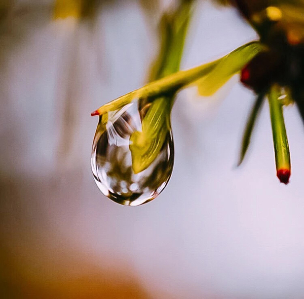 Beautiful Examples Of Water Drop Photography - 27