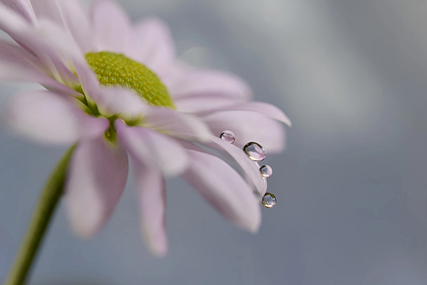Beautiful Examples Of Water Drop Photography - 3