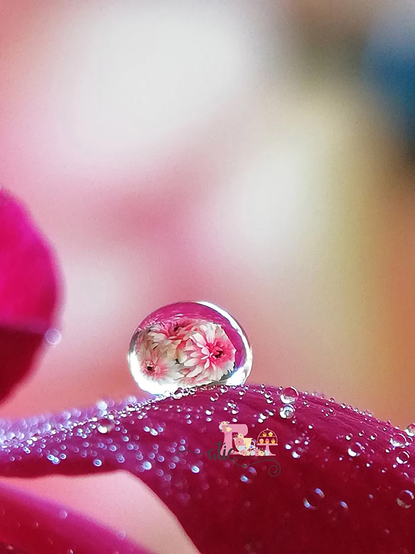Beautiful Examples Of Water Drop Photography - 31