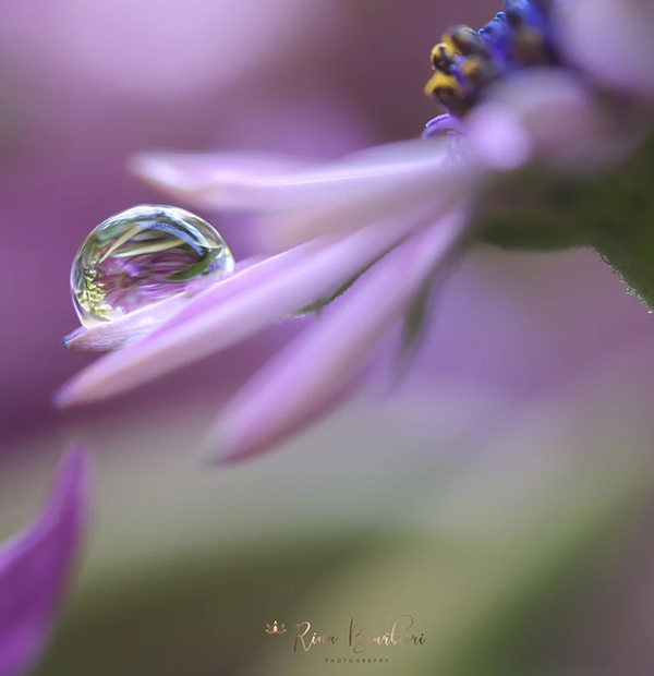 Beautiful Examples Of Water Drop Photography - 33