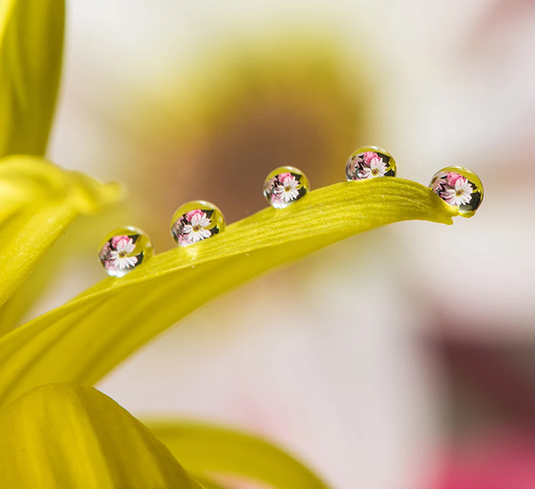 Beautiful Examples Of Water Drop Photography - 7