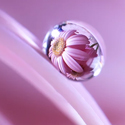 Post Thumbnail of 35 Beautiful Examples Of Water Drop Photography