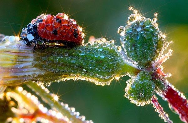 25 Beautiful close-up Photography