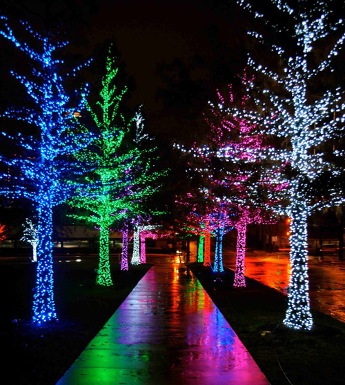 Twinkle Lights Photography-13
