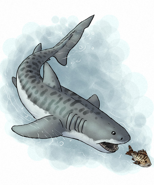 How to Draw Animals: Fish and Sharks in Adobe Illustrator