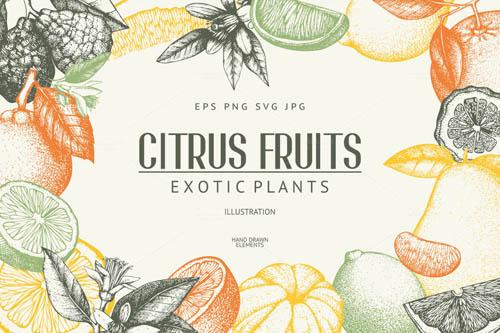 Vintage Citrus Fruits Sketch Set