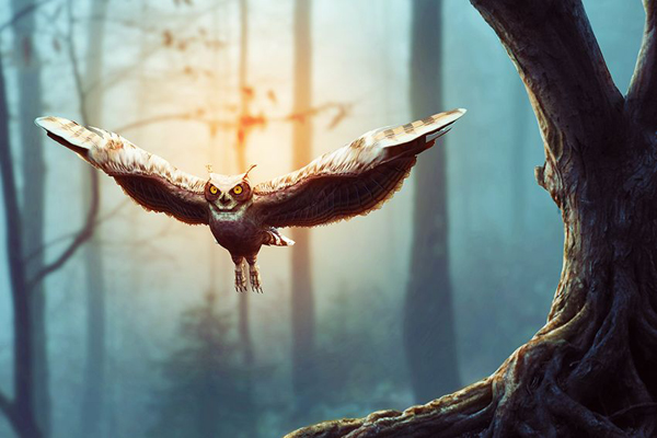 How to Create a Flying Owl Photo Manipulation for Beginners With Photoshop