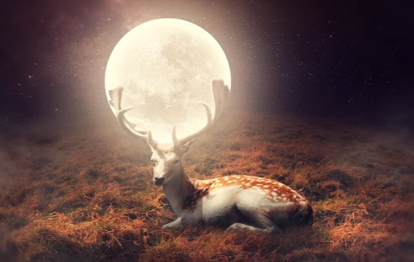 Beautiful Photo Manipulation Example : Deer Of Moon